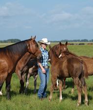 buy premarin foals
